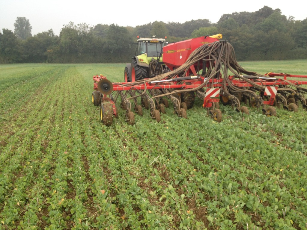 No till drilling in East Anglia