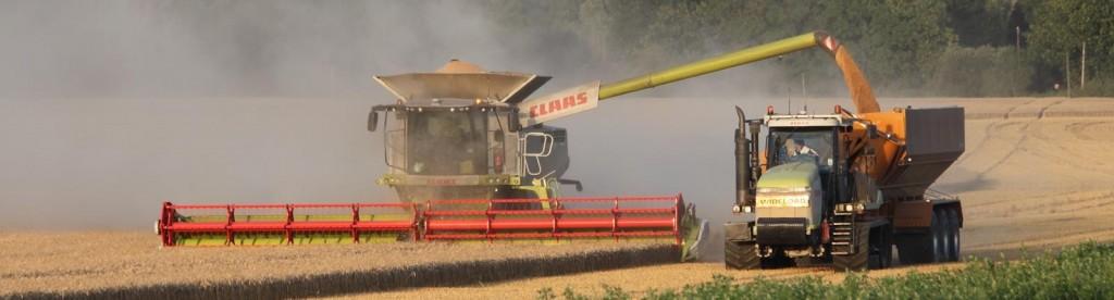 Harvest in Summer