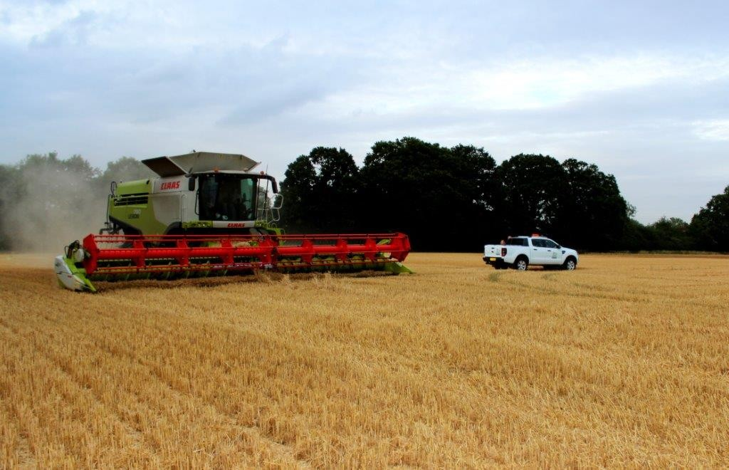 Harvest 2015 1st wheat