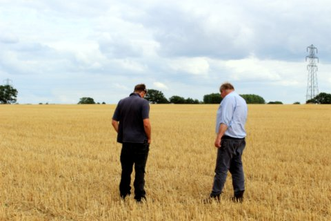 Inspecting for cover crop after harvest 2015